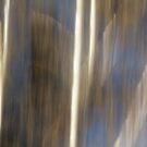 Daylight Birch by Lynn Wiles