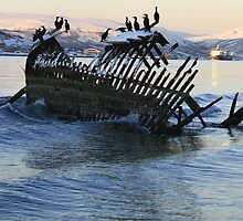 Great Cormorant at the shipwreck by Frank Olsen
