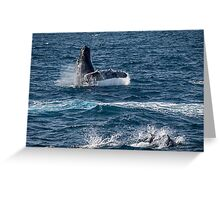Playful sea mammals Greeting Card