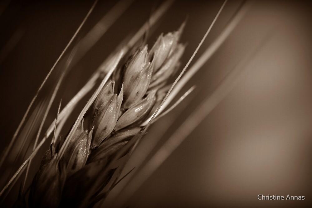 Grain by Christine Annas