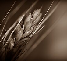 Grain by Christine Annas