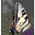 Vintage Butterfly by JanDeA