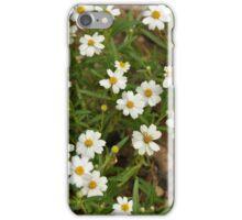 Daisies Daisies Daisies! iPhone Case/Skin