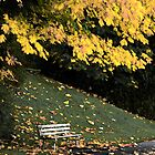 Lonely Bench of Yellow by LAaustin