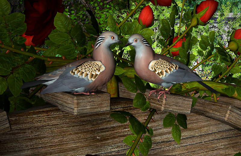 Turtle-doves love by Ken Gilliland