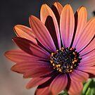 Unknown Flower by MaryLynn