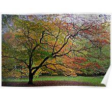 Westonbirt Arboretum, Gloucester, UK Poster