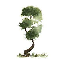 Little Zen Tree 147 Photographic Print