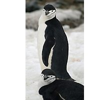Chinstrap penguins Photographic Print