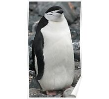 Chinstrap penguin 3 Poster