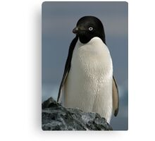 Adelie penguin Canvas Print