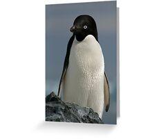 Adelie penguin Greeting Card