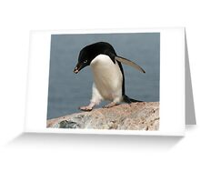Adelie penguin 2 Greeting Card