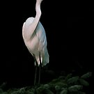A Great  Egret by RoseMarie747