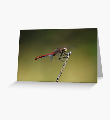 Meadowhawk Greeting Card