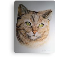 Cat coloured pencil drawing Canvas Print