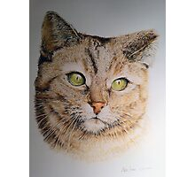 Cat coloured pencil drawing Photographic Print
