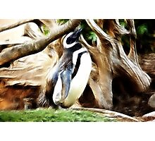 Penguin Alcove: Photographic Print