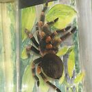 Mexican Red Knee Tarantula (Brachypelma smithii) by Michaela1991