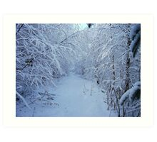Deep in the Wintry Forest Art Print