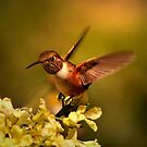 RB FEATURED IN JUNE 2013..RUFUS HUMMINGBIRD... by RoseMarie747