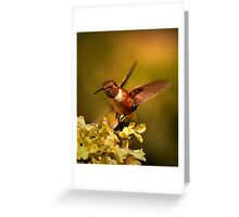RB FEATURED IN JUNE 2013..RUFUS HUMMINGBIRD... Greeting Card