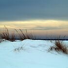 Winter Beach by BarbL