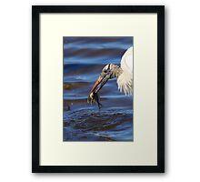 Wood Stork Fishing II Framed Print