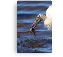 Wood Stork Fishing II Canvas Print