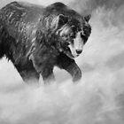 Grizz (B&W) by Will Vandenberg