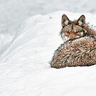 Coyote Huddle by Bill Maynard