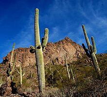 lookin up at a cactus. by Amanda Huggins