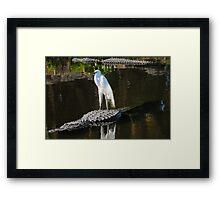 Alligator Rodeo Framed Print