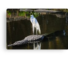 Alligator Rodeo Canvas Print