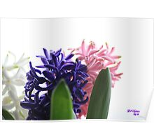 Spring Flowers-Fresh scents Poster