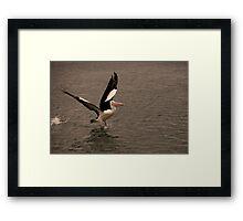 Pelican Launch Framed Print