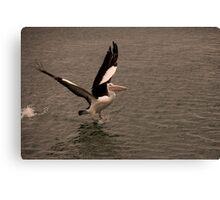 Pelican Launch Canvas Print