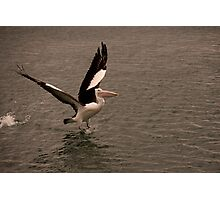 Pelican Launch Photographic Print