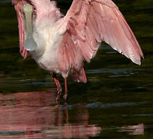 PRETTY IN PINK by Brenda Dow