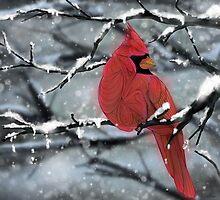 Cardinal by Ben Geiger