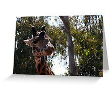 Giraffe at San Diego Zoo Greeting Card