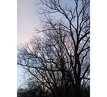 Bare Trees Against Blue Sunset - Green Lane, PA Photographic Print