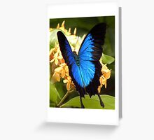 Ulysses Butterfly, Mission Beach, QLD Greeting Card