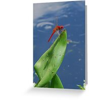 Red dragonfly sunning Greeting Card