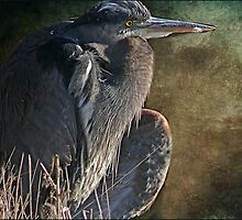 The Heron's Posture by Carolann23