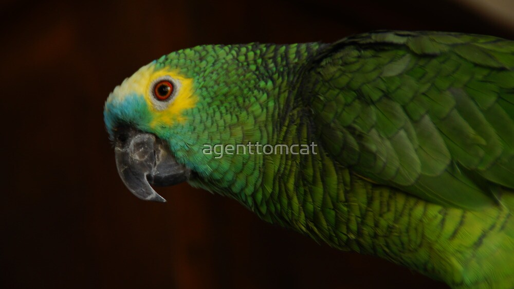 Parrot from the side by agenttomcat