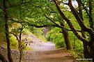 Plymbridge Woods by DonDavisUK