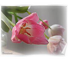 Sweet Pink Poster