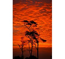 Red Sky Night - My backyard...! Etty Bay Nth Qld Photographic Print