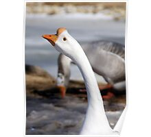Threatening goose Poster